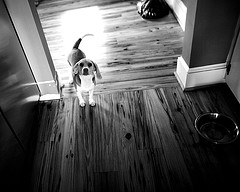 dog by bondseye via flickr